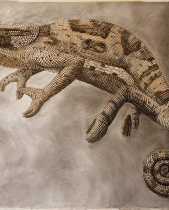 Chameleon Study