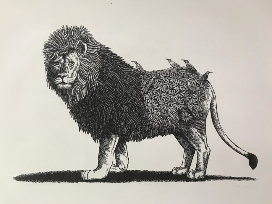 Cape Lion and Friends
